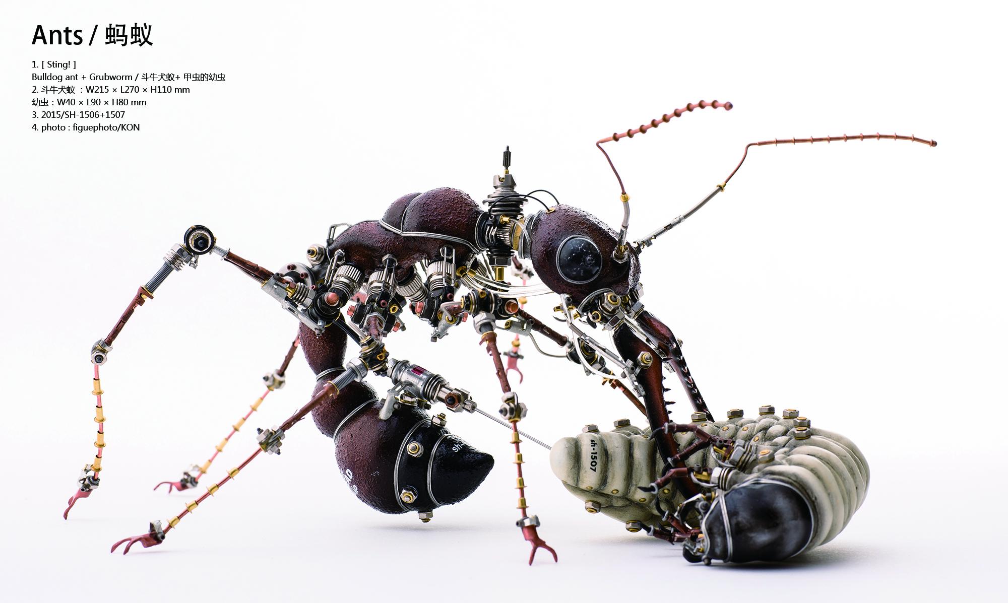 蚂蚁+甲虫幼虫.jpg