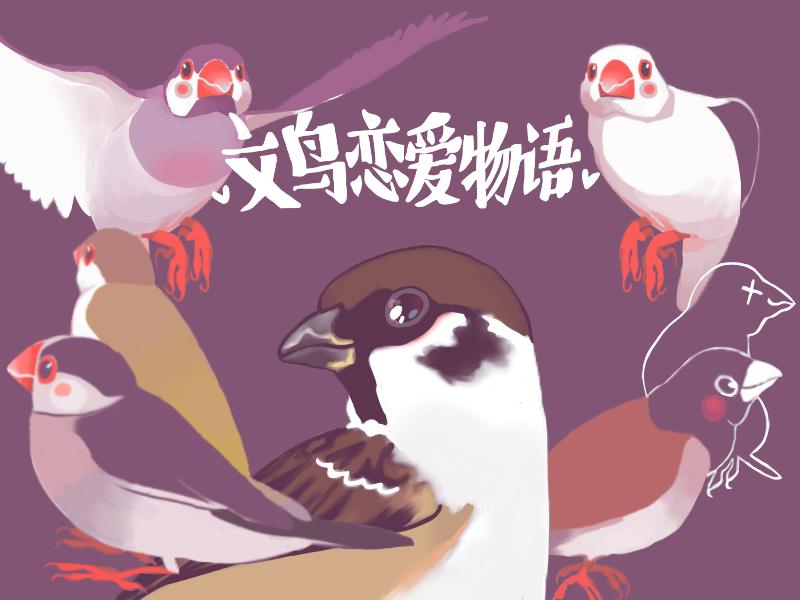 文鸟-封面图(1).png