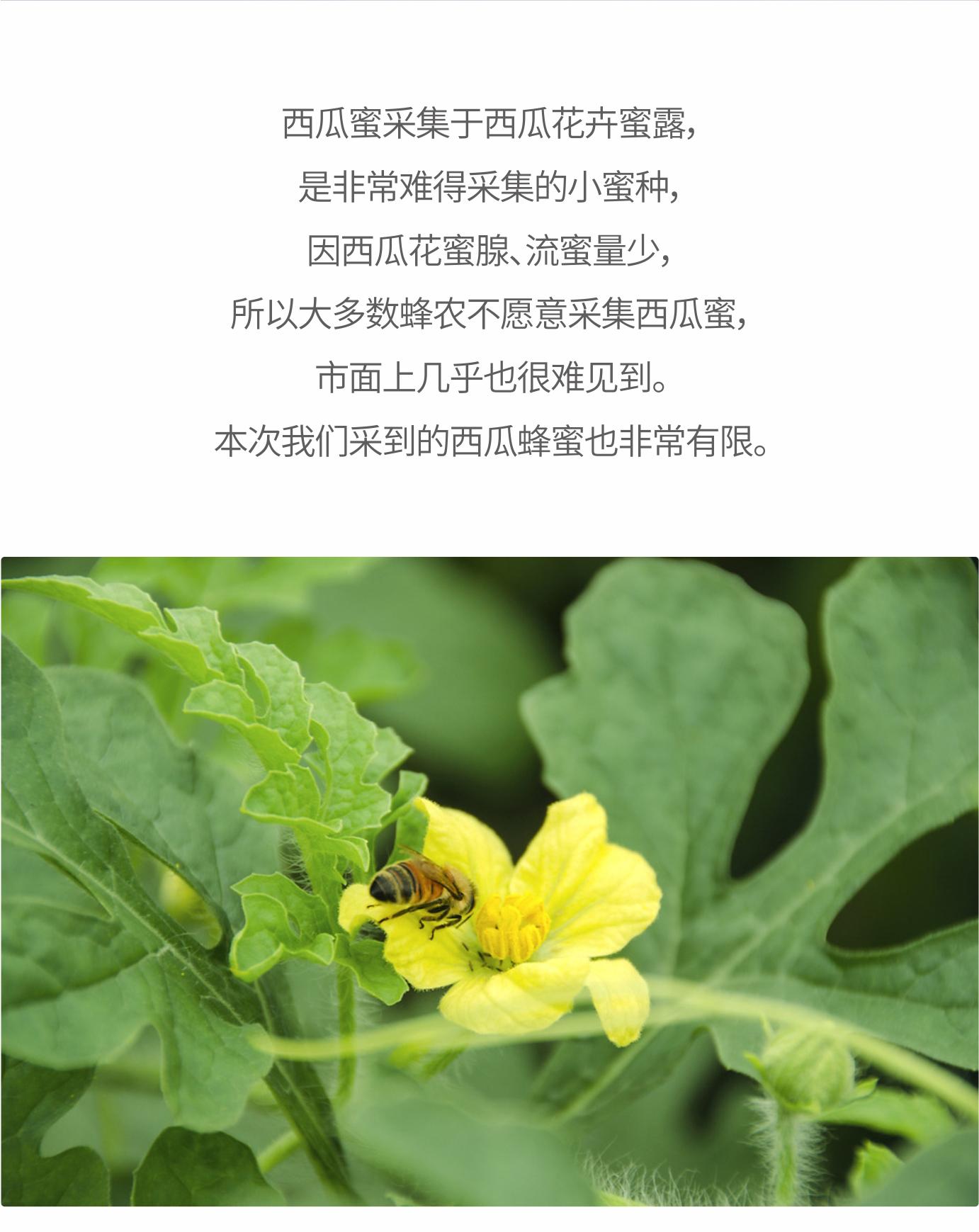 西瓜蜂蜜_08.jpg