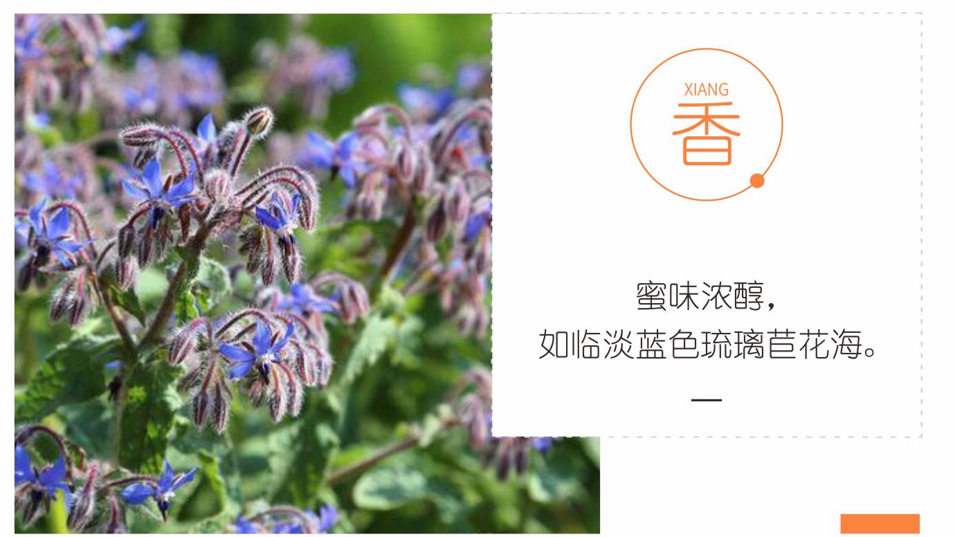琉璃苣蜂蜜_12.jpg