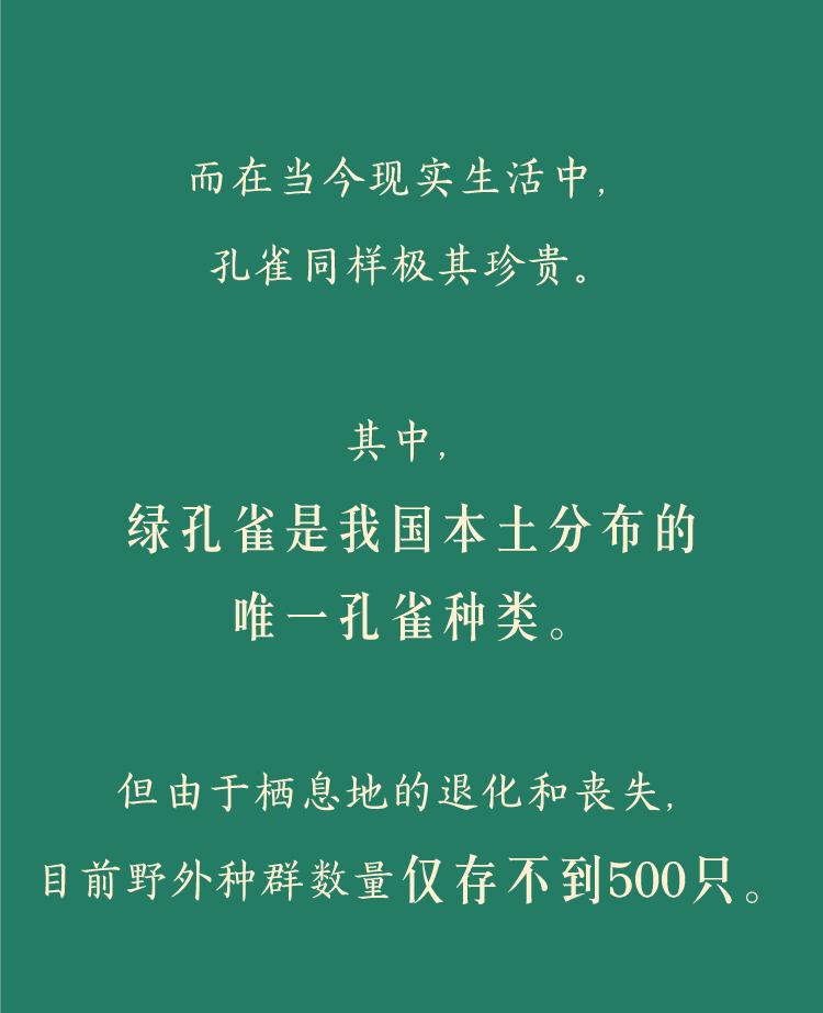孔雀修改_05.jpg