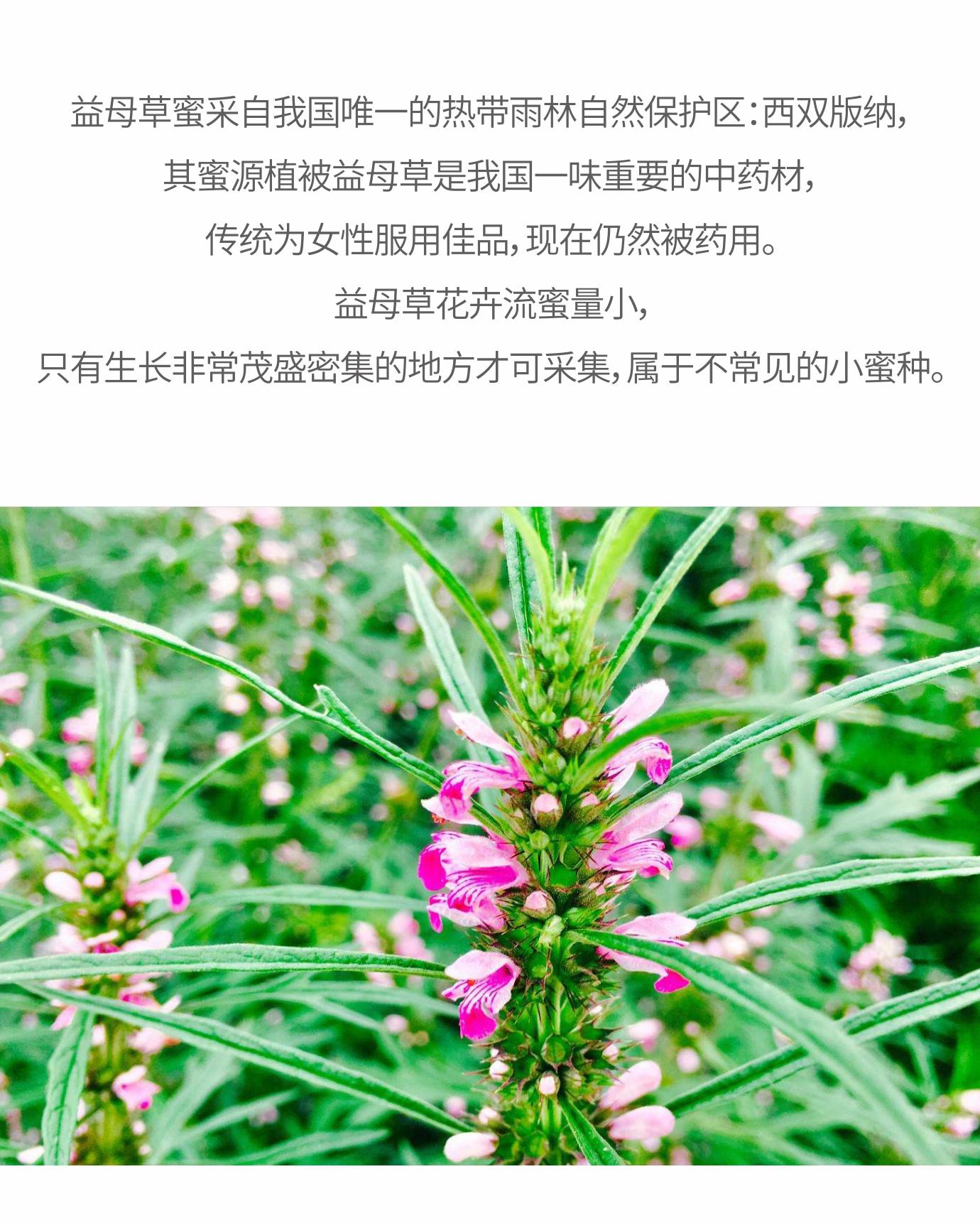 益母草磨点众筹 (6).jpg