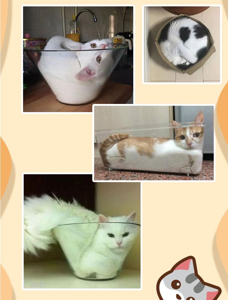 猫详情图2-05.jpg