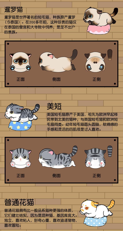 肥宅猫详情 (4).jpg