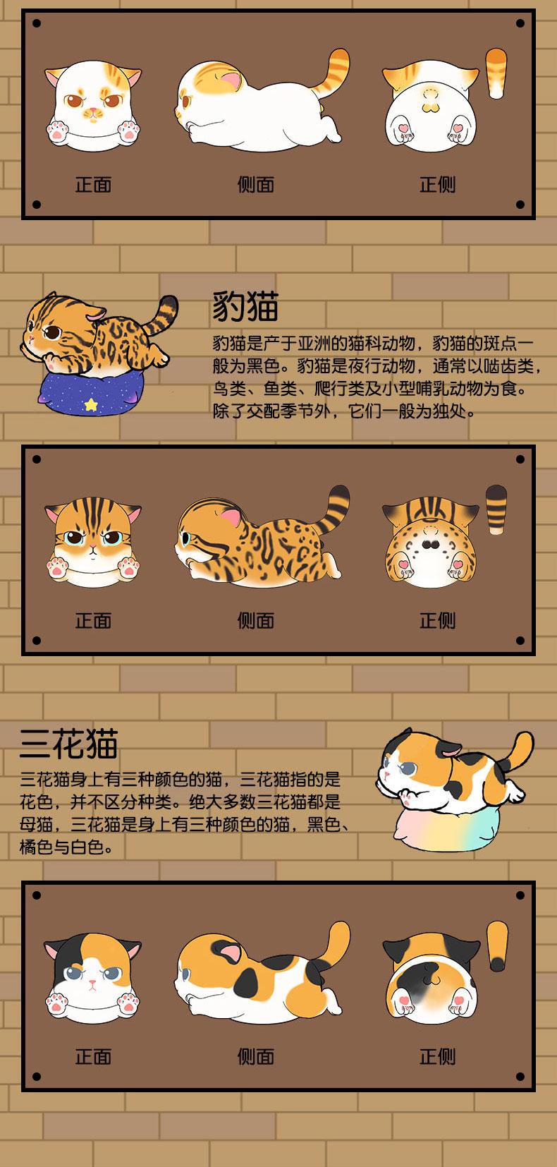 肥宅猫详情 (5).jpg