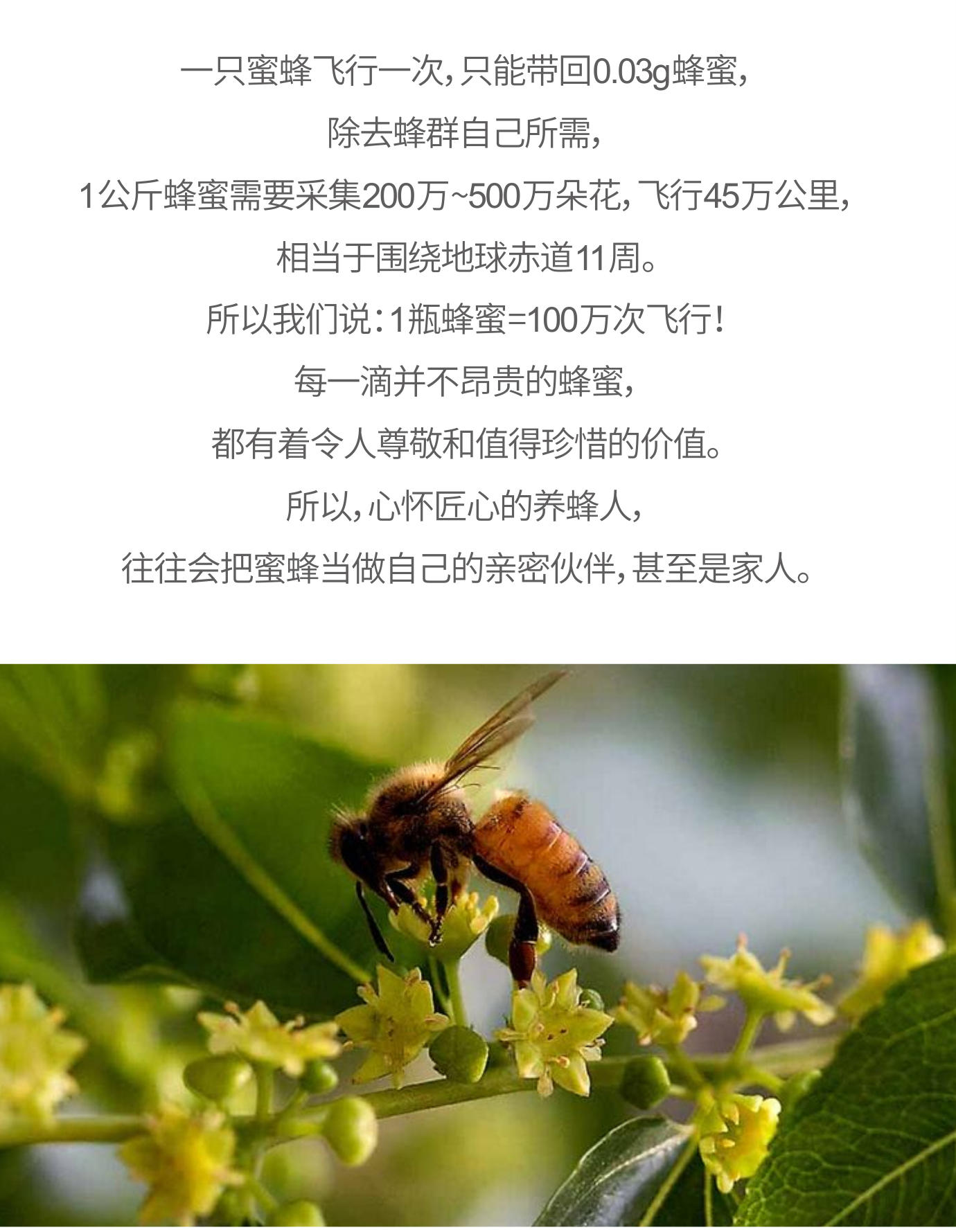 枣花蜜2_01.jpg