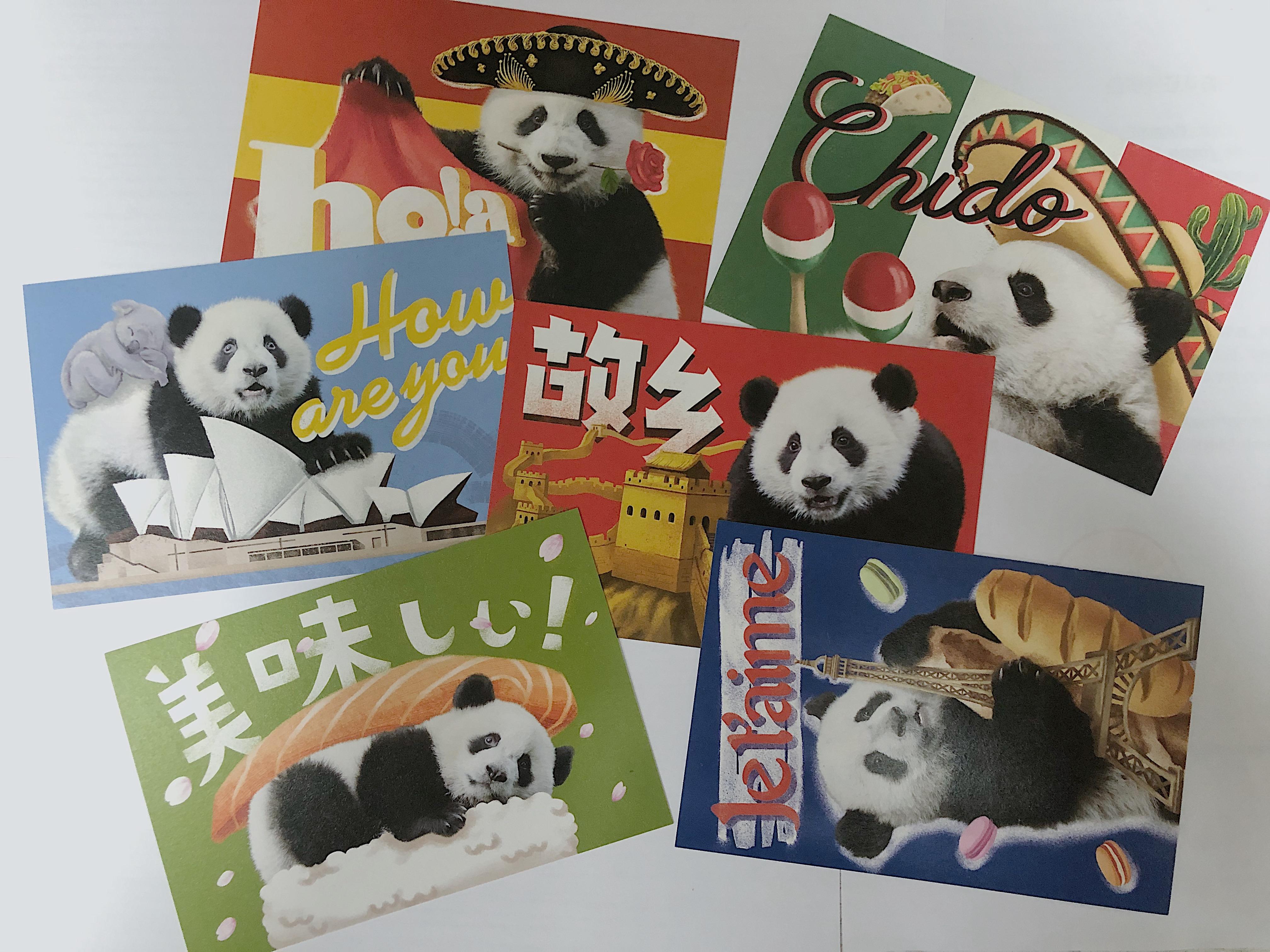 环球熊猫明信片.jpg