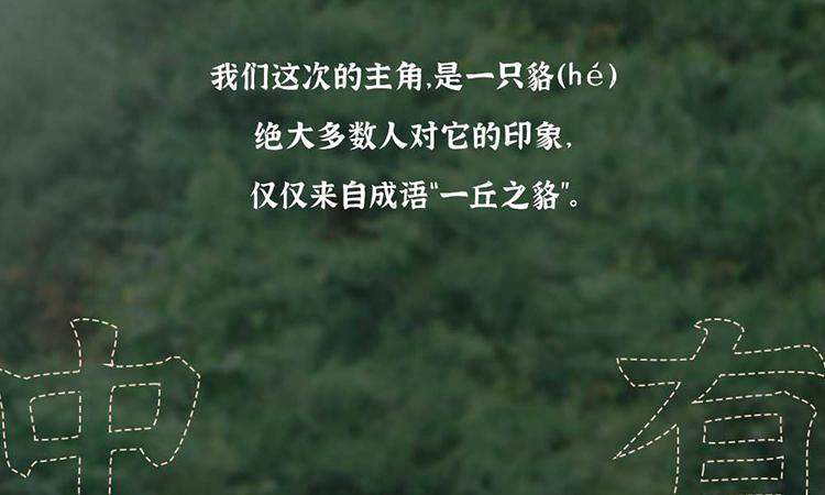 众筹详情页_03-05.jpg