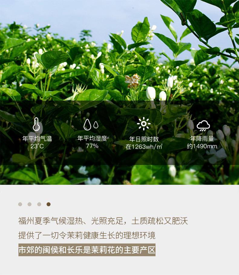 20200819-790茉莉花茶_11.jpg