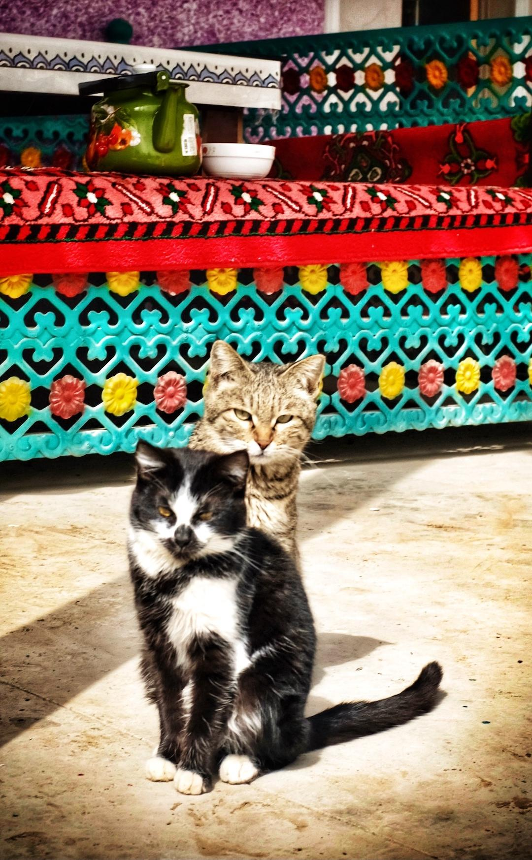 猫咪.jpg